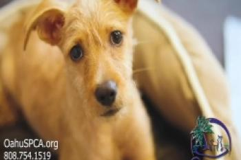 Oahu SPCA helps over 9,000 animals each year, every life is precious.